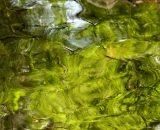 Water reflections - 06