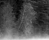 fog-on-lake-auburn_B-W 01013