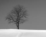 lone-tree-on-snow-covered-ridge_B-W 01028