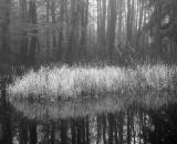 marsh-at-pond-edge_B-W 01020