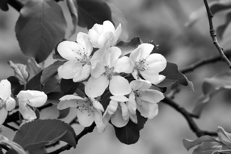Black white gallery ii