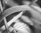 close-up-of-dew covered-grass-and-leaves_B-W 02022