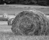 rolled-hay-bales-in-field_B-W 02019