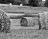 rolled-hay-bales-in-field_B-W 02020