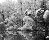 snow-covered-trees-along-Sabattus-River_B-W 02011