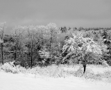 snow-covered-trees-along-field_B-W 02012