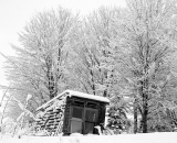 snow-covered-trees-and-shack_B-W 02013