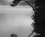 tree-arched-over-water-with-reflection_B-W 02037