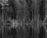trees-at-edge-of-woodland-pond_B-W 02035