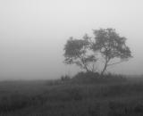 two-trees-in-foggy-field_B-W 02023