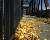 Autumn leaves at the Foot Bridge