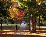 Pathway on the Quad in Autumn