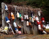 lobster-bouys-on-old-fence_DSC05484
