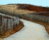 wooden-walkway-and-fence-among-dune-grass_DSC05352
