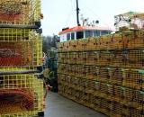 yellow-wire-lobster-traps-on-dock_DSC05823