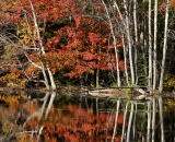 Autumn reflections on beaver pond 01