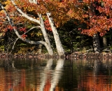 Autumn reflections on beaver pond 02
