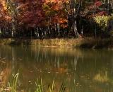 Colorful foliage along Sabattus Stream