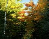 fall-foliage-along-a-dirt-road_DSC00192