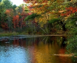 fall-foliage-at-edge-of-lake_DSC02688