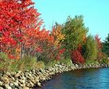 fall-foliage-maples-along-lake-shore_Dscn2740