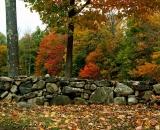 fall-foliage-maples-along-stone-wall_DSC02604