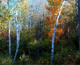 fall-foliage-maples-and-birch_DSC02585