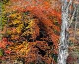 Fall colors along stream