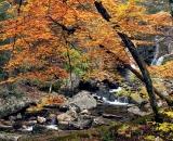 Fall foliage with waterfall