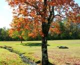 Beautiful fall foliage and stream