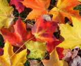 Colorful fall leaves on the ground