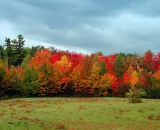 fall-foliage-at-edge-of-field_ 006