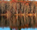 fall-foliage-brown-oaks-reflected-in-lake_P1010776