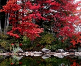 fall-foliage-maples-along-lake_ 123