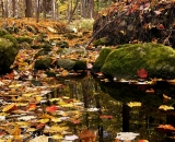 Fall foliage on woodland stream