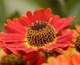 Close-up, summer flower -03