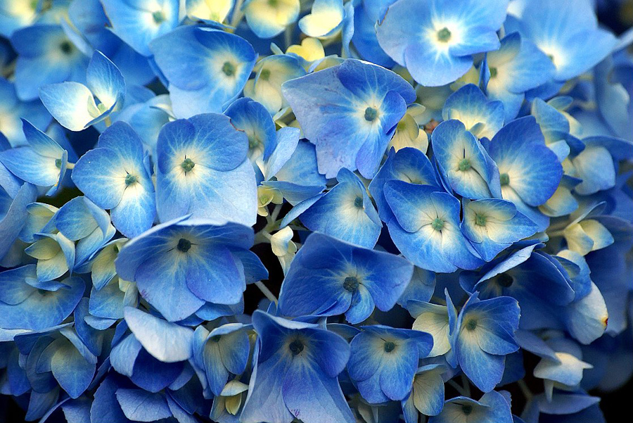 Blue garden flowers blue flowers by garden gnome on - Plants with blue flowers a splash of colors in the garden ...