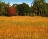 Scarborough-Marsh-in-autumn_DSC01552