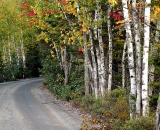 autumn-birches-along-dirt-road_DSC00316