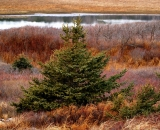 autumn-spruce-and-vegetation-at-coast_DSC04817