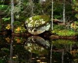 edge-of-northern-Maine-pond_DSC00318
