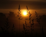 Field grasses silhouetted against sunrise sky-01