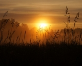Field grasses silhouetted against sunrise sky