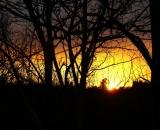 sunset on behind trees_DSC01076