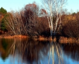 autumn-pond-reflections-with-birch_SCE 190