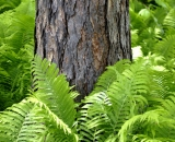 Ferns surrounding tree trunk