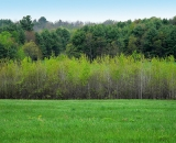 green-trees-and-field-in-spring_SCE 162