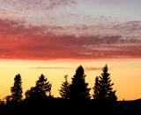 Sunset over evergreen trees