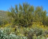 desert-vegetation_DSC06671