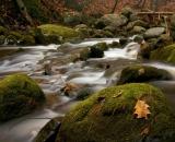 bobbin-mill-brook-in-autumn_DSC06923